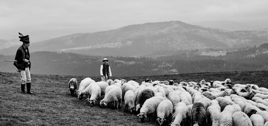 """Reportaż z gór """"Mieszanie owiec"""""""